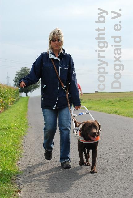 Frau wird von ihrem Blindenführhund geführt. Es handelt sich hierbei um eine braune Labrador-Führhündin
